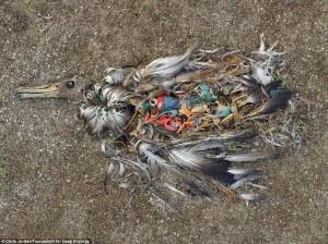 Blog for July 2015 Killer Waste